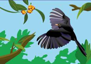 vogels, eksters, kalender, vogelkalender, kalender laten maken, illustratie, illustratie laten maken, grafische design, planten, bloemen, kaarten, kaarten laten maken, rotterdam, cadeaushop rotterdam, Delfshaven, cadeauwinkel, merel, voorjaar