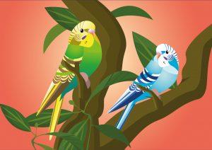 vogels, eksters, kalender, vogelkalender, kalender laten maken, illustratie, illustratie laten maken, grafische design, planten, bloemen, kaarten, kaarten laten maken, rotterdam, cadeaushop rotterdam, Delfshaven, cadeauwinkel, parkieten