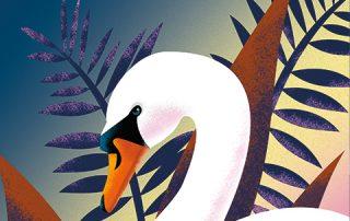 zwaan, swan, illustratie, watercolor, illustratie laten maken, vis, natuur, prent, kinderboek